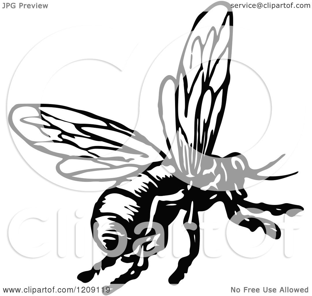 Bee Clipart Free