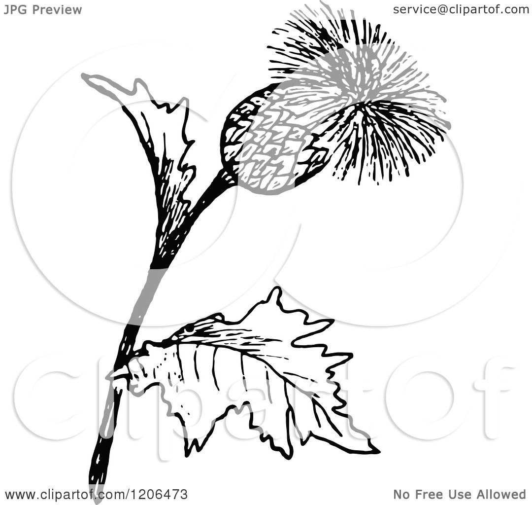 Clipart Of A Vintage Black And White Thistle Plant
