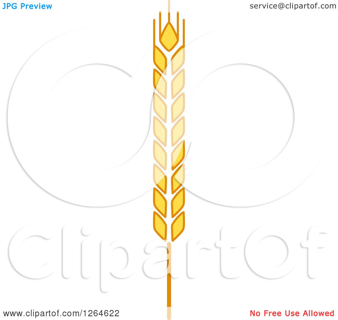 hight resolution of clipart of a whole grain ear royalty free vector illustration by vector tradition sm