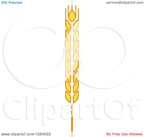 small resolution of clipart of a whole grain ear royalty free vector illustration by vector tradition sm