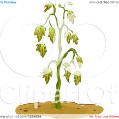 Plant Diagram Clip Art Origami Flower Instruction Clipart Of A Wilting Royalty Free Vector