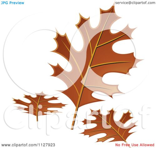 small resolution of clipart of autumn oak leaves royalty free vector illustration by lal perera