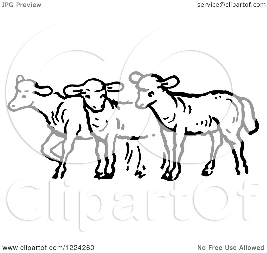 Clipart Of Black And White A Group Of Sheep