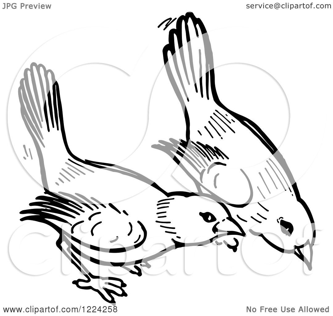 Clipart Of Black And White Birds Pecking The Ground