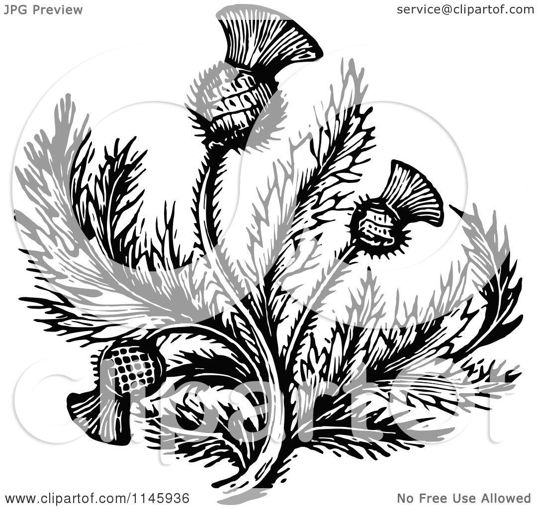 Thistle Flower Clip Art Cliparts