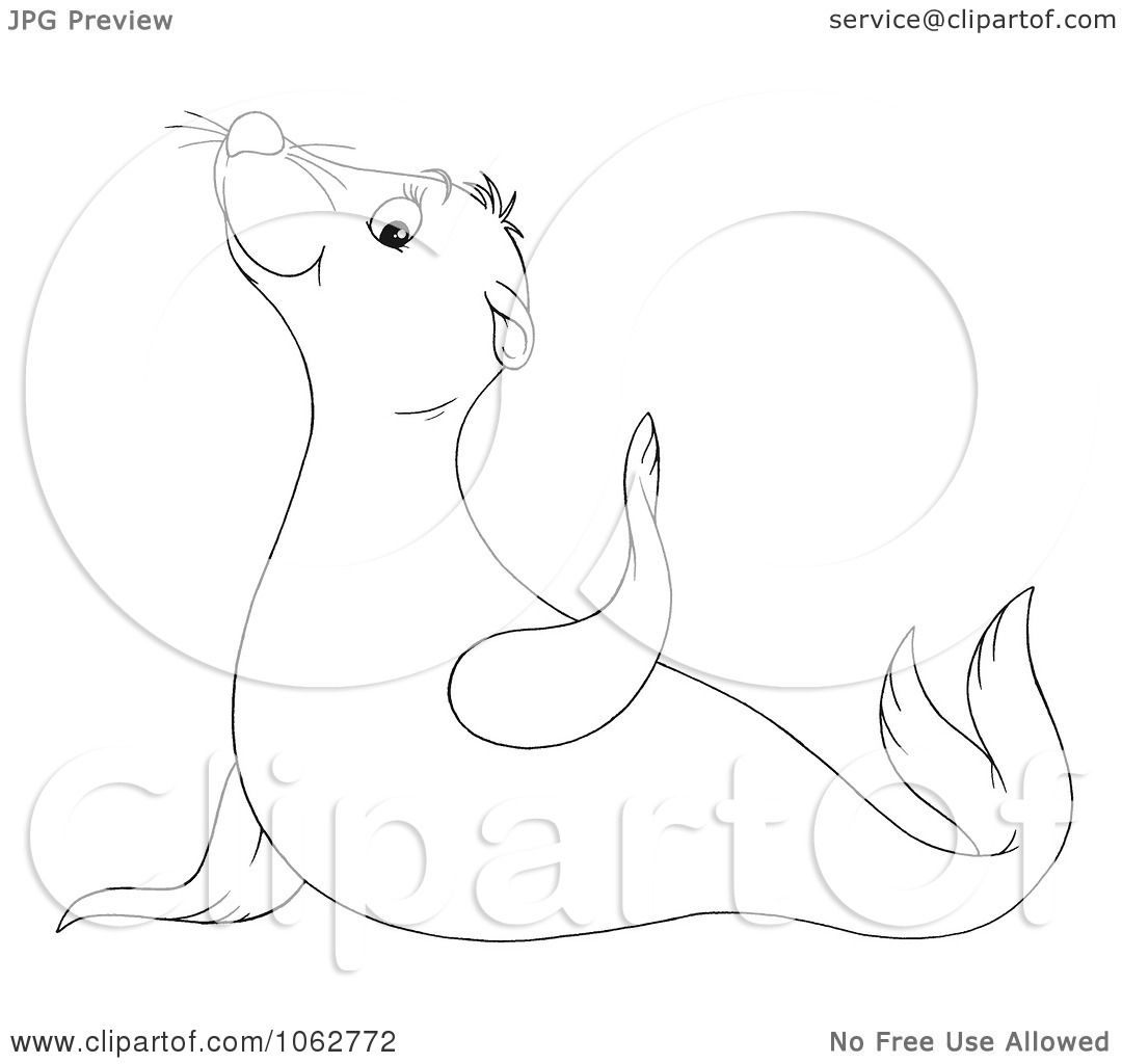 Cute Sea Lion Drawing