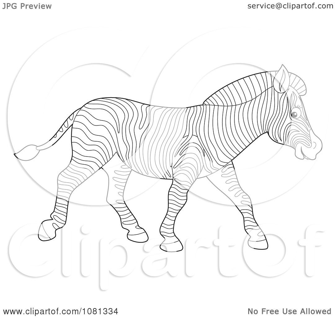 Clipart Outlined Zebra Walking