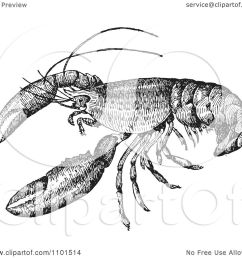 clipart retro black and white crayfish royalty free vector illustration by bestvector [ 1080 x 1024 Pixel ]