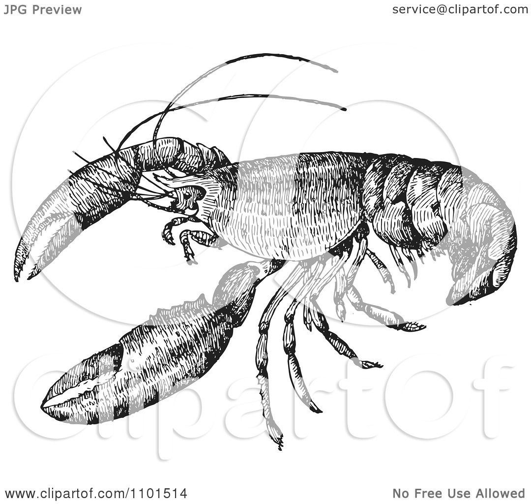 hight resolution of clipart retro black and white crayfish royalty free vector illustration by bestvector