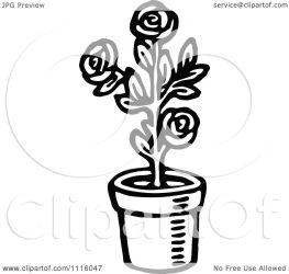 rose plant potted clipart illustration vector retro royalty prawny background