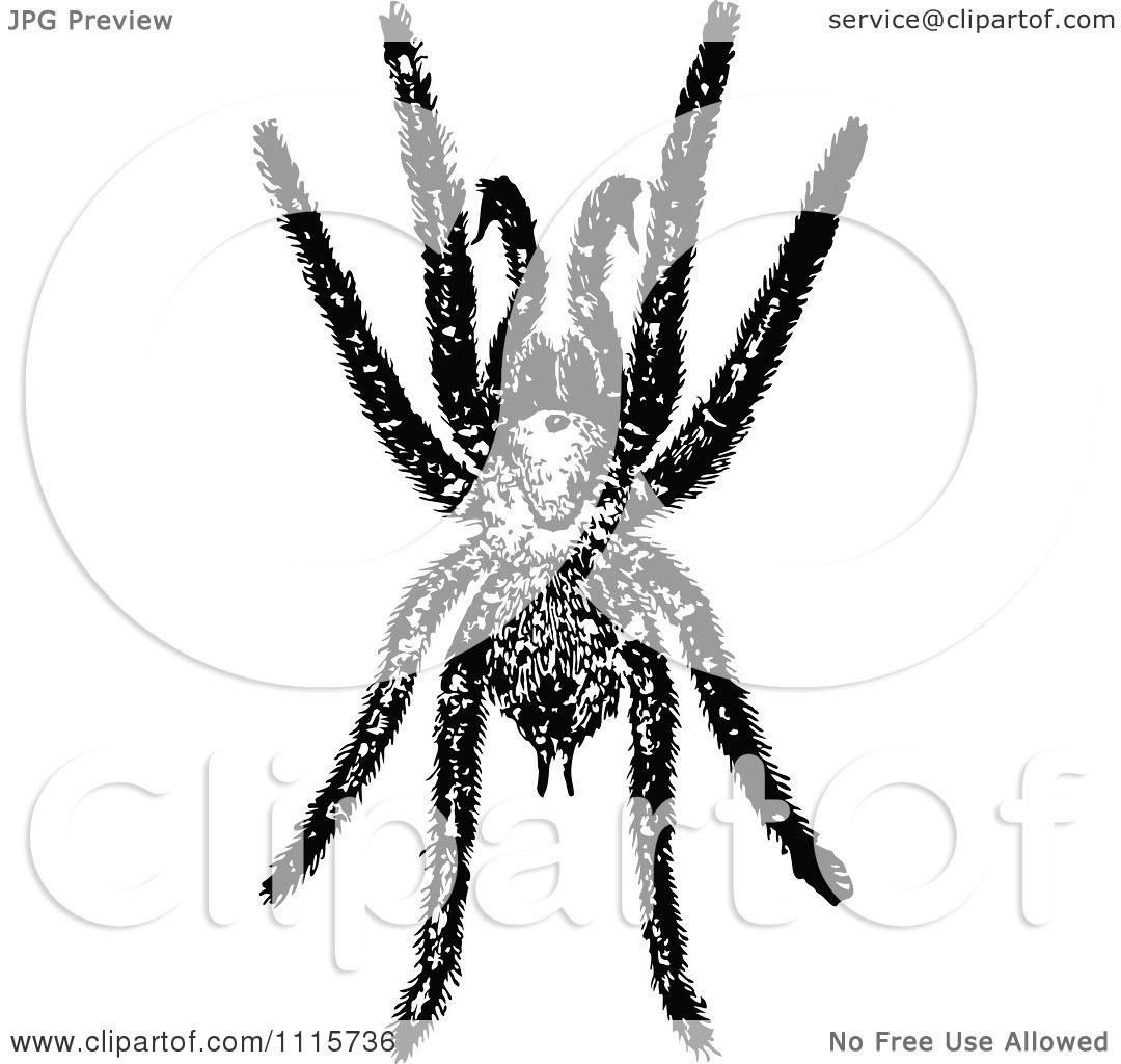 Clipart Retro Vintage Black And White Tarantula Spider