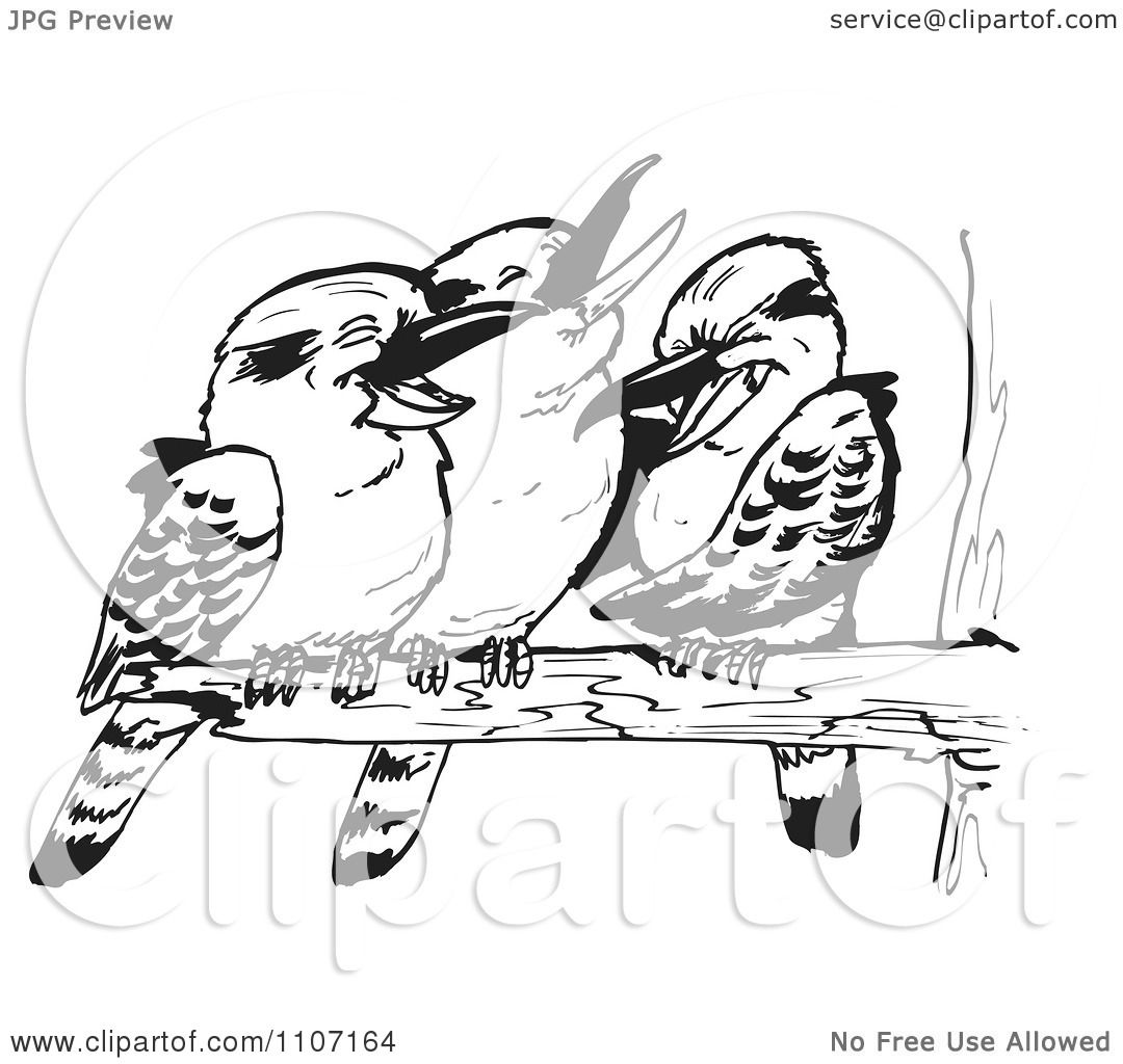 Kookaburra Clip Art Black And White Sketch Coloring Page
