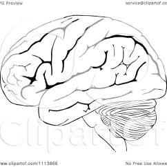 Frontal Brain Diagram No Labels Potential Energy Worksheet Key Clipart Vintage Black And White Human 2 Royalty