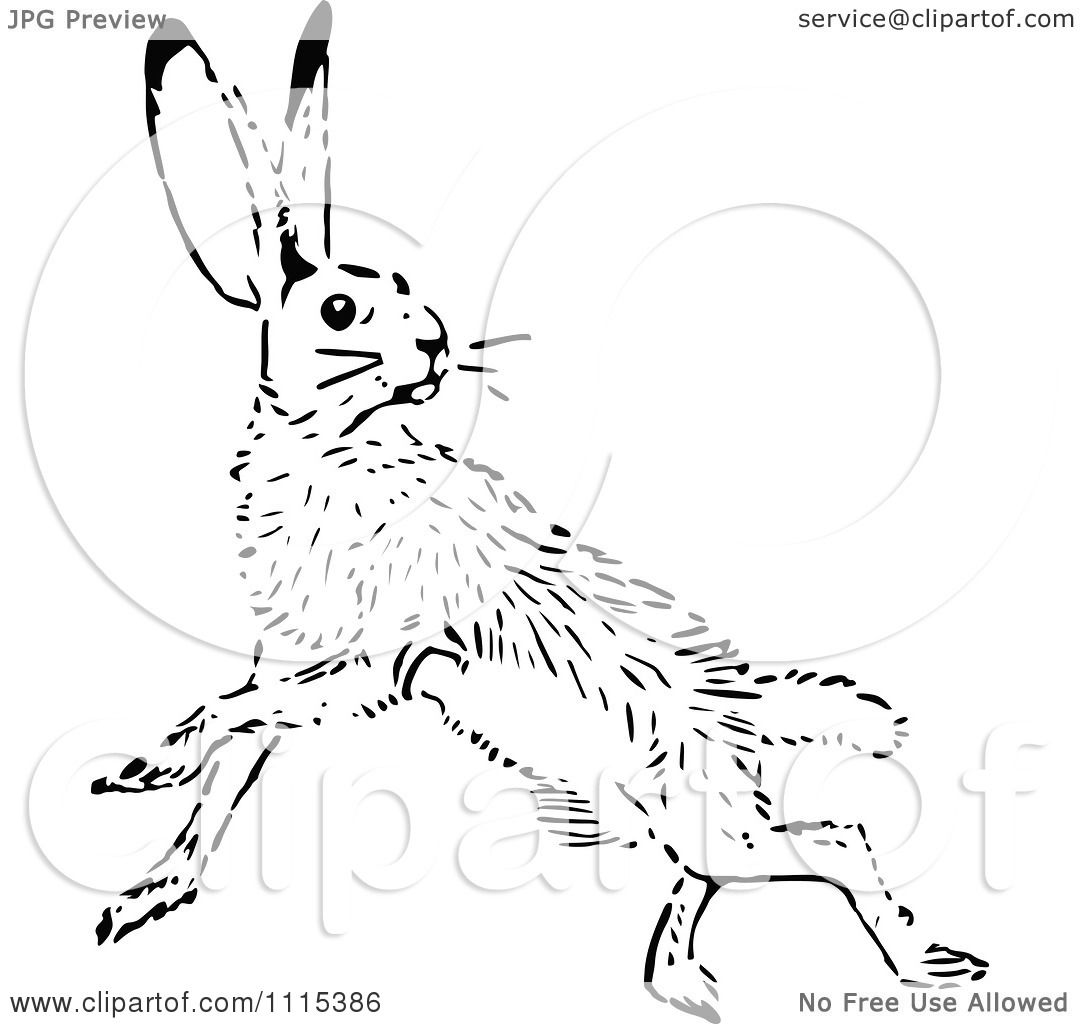 Clipart Vintage Black And White Jack Rabbit