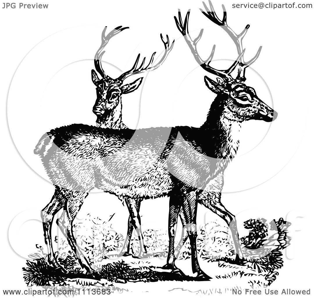 Clipart Vintage Black And White Male Deer
