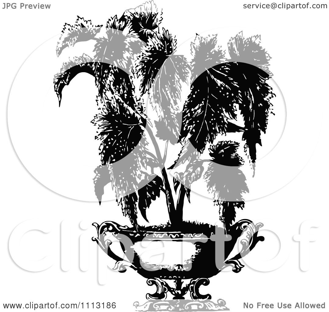 Clipart Vintage Black And White Potted Begonia Plant