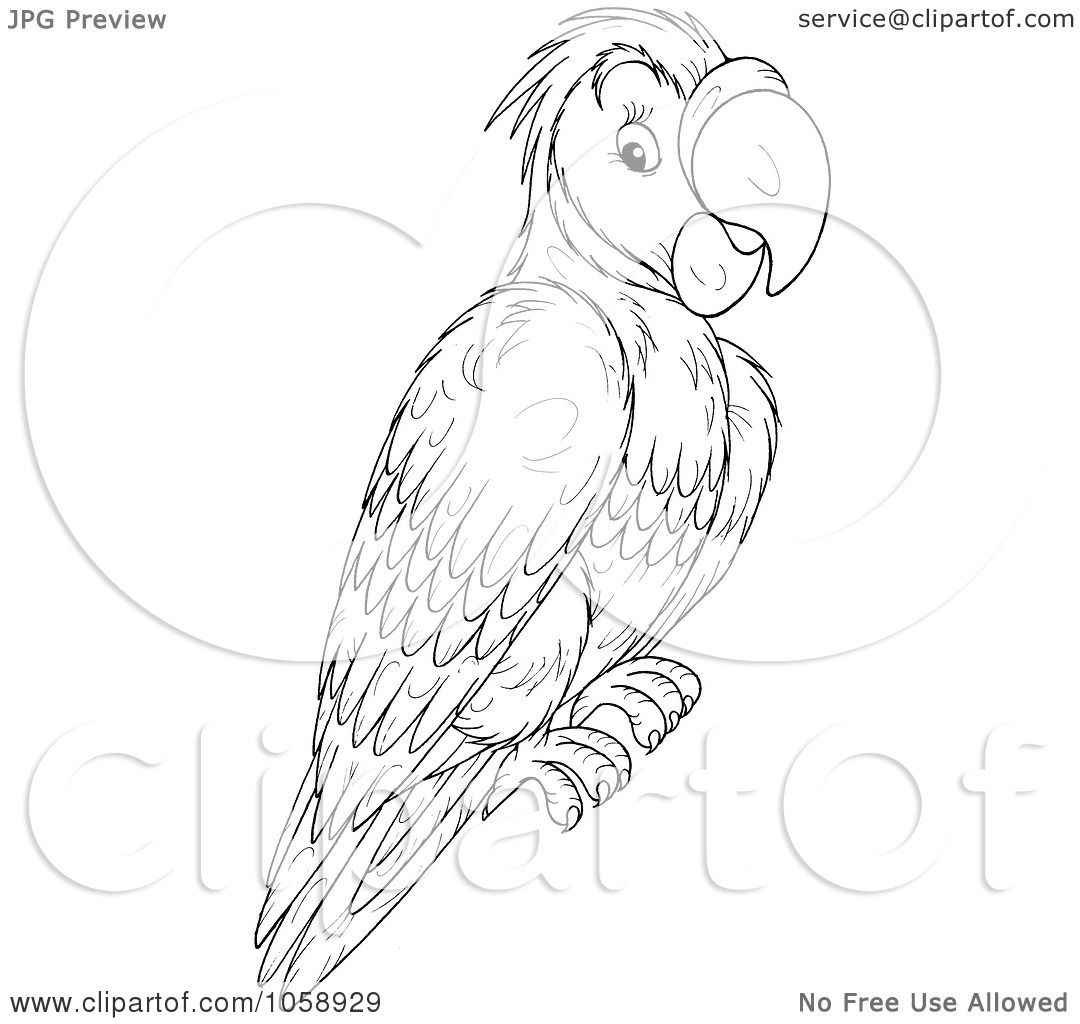 Royalty Free Clip Art Illustration Of An Outlined Parrot