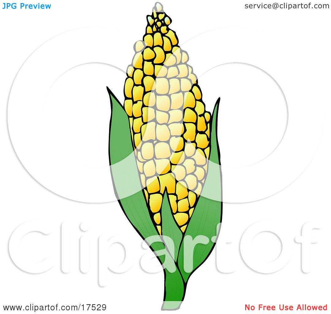 Royalty Free Clipart Of Sweet Yellow Corn On The Cob By Djart