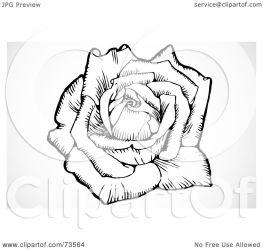 rose blooming flower clipart illustration bestvector royalty rf regarding notes