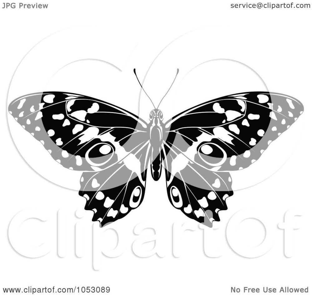 medium resolution of  black and white butterfly clip art royalty free vector clip art illustration of a