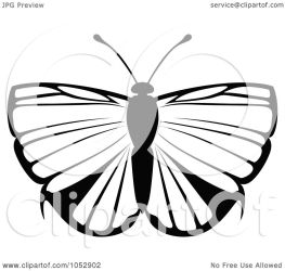 butterfly flying illustration clip vector royalty dero clipart background