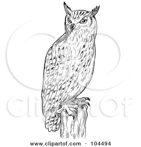 Royalty Free Bird Illustrations by patrimonio Page 3