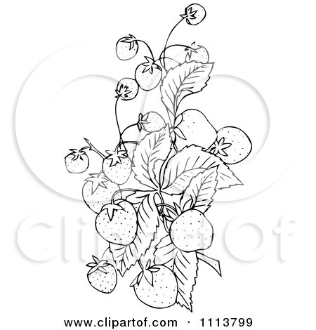 Royalty-Free (RF) Clipart of Strawberry Plants