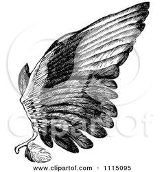 bird wing illustration clipart royalty vector prawny regarding notes