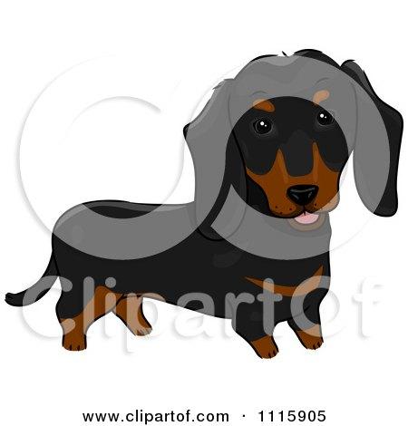 cute little dachshund puppy dog