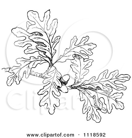Tattoo Ideas, Oak Leaves, Oak Leaf Tattoos, Google Search