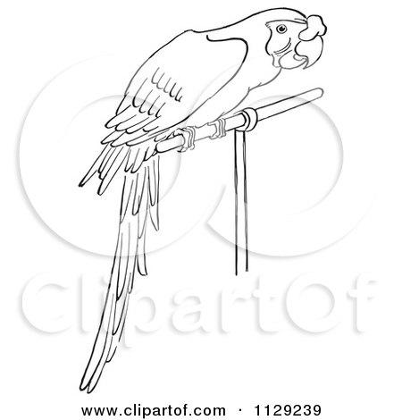 Diagram Of Cavalier King Charles Spaniel, Diagram, Free