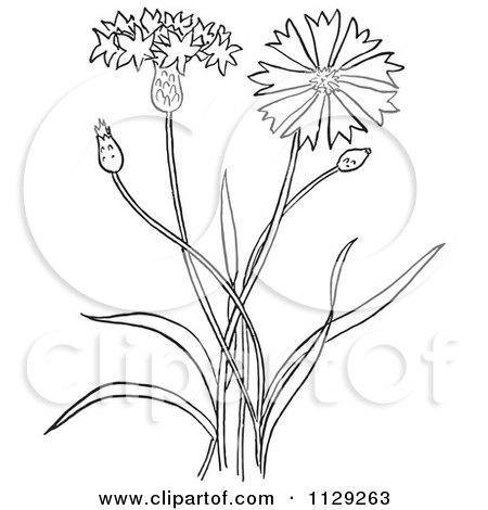 Royalty-Free (RF) Botanical Clipart, Illustrations, Vector