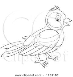 bird clipart cartoon bannykh alex vector use protected