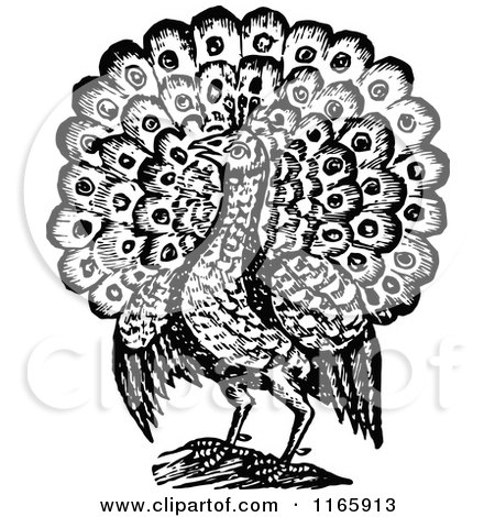 Clipart Vintage Black And White Peacock With Long Feathers