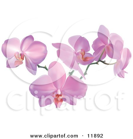 Royalty-free flower clipart illustration of a stem of pink orchids.