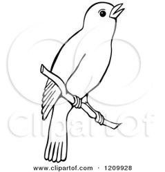bird clipart branch illustration birds royalty prawny vector illustrations clipartof