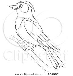 purple martin bird clipart illustration vector royalty bannykh alex