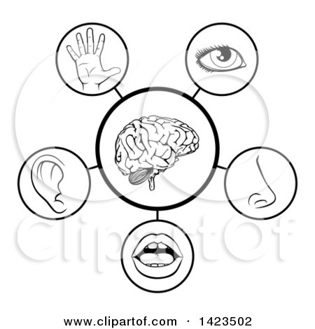 five senses diagram 96 civic ecu wiring clipart of a brain with the around it royalty free black and white 5