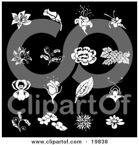 Royalty-free clipart picture of a collection of white rose, grapes,