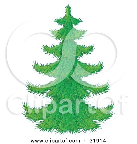 Cartoon Of An Evergreen Christmas Tree Flocked In Snow