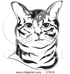 outline face cat clipart cats bobtail illustration american david sitting rey abyssinian clipartof animal