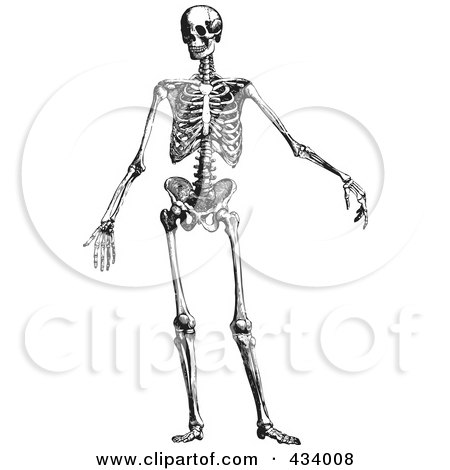 skeleton picture small human