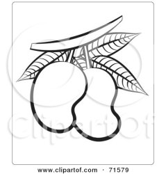 outline mangoes clipart mango illustration royalty lal perera rf holding lineart hand background illustrations clipartof