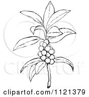Royalty Free Plant Illustrations by Prawny Vintage Page 3