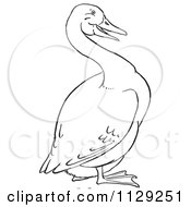 Royalty-Free (RF) Goose Clipart, Illustrations, Vector