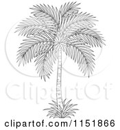 Royalty-Free (RF) Clipart of Tropical Plants