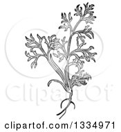 Clipart of a Black and White Woodcut Herbal Tansy Plant