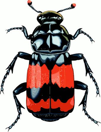 beetle 20clipart clipart panda