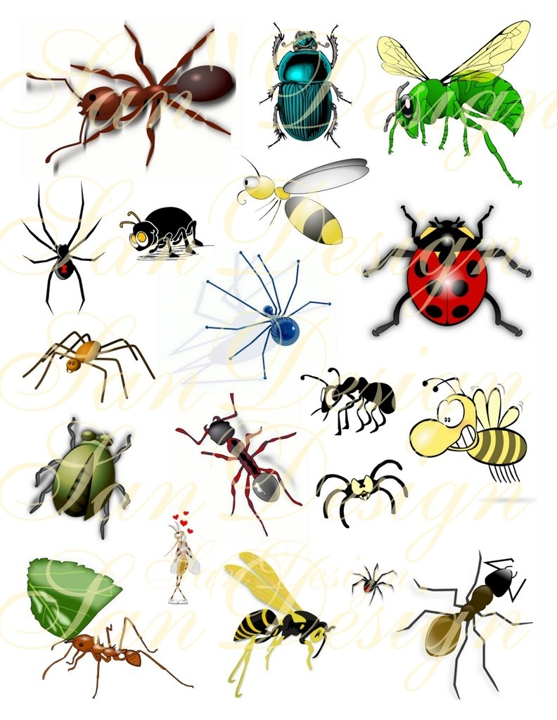 hight resolution of bug clipart