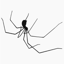 spider clip clipart copyright halloween transparent cellar daddy web tattoo long legs spiders silhouette clipartpanda cliparts silhouettes clipground bw library